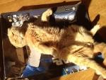 box AND sunpuddle bliss