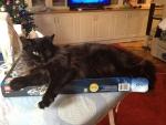 McGonagall likes to sleep on boxes.jpg